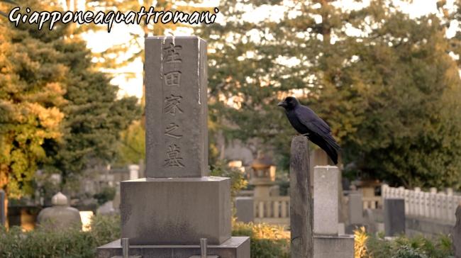 cimitero-corvo